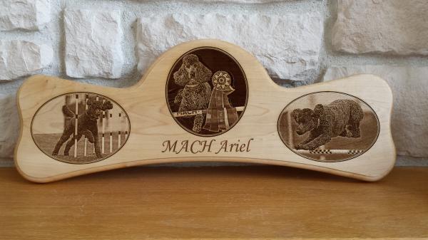 Agility - MACH Bar - Ariel